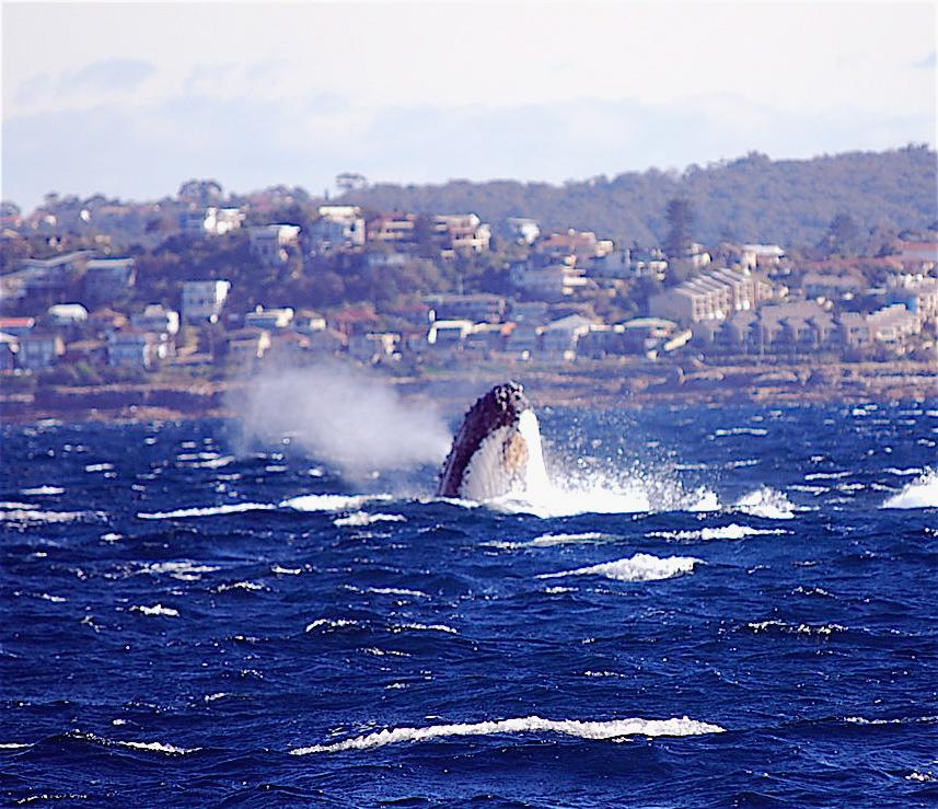 Fishfinder Whale