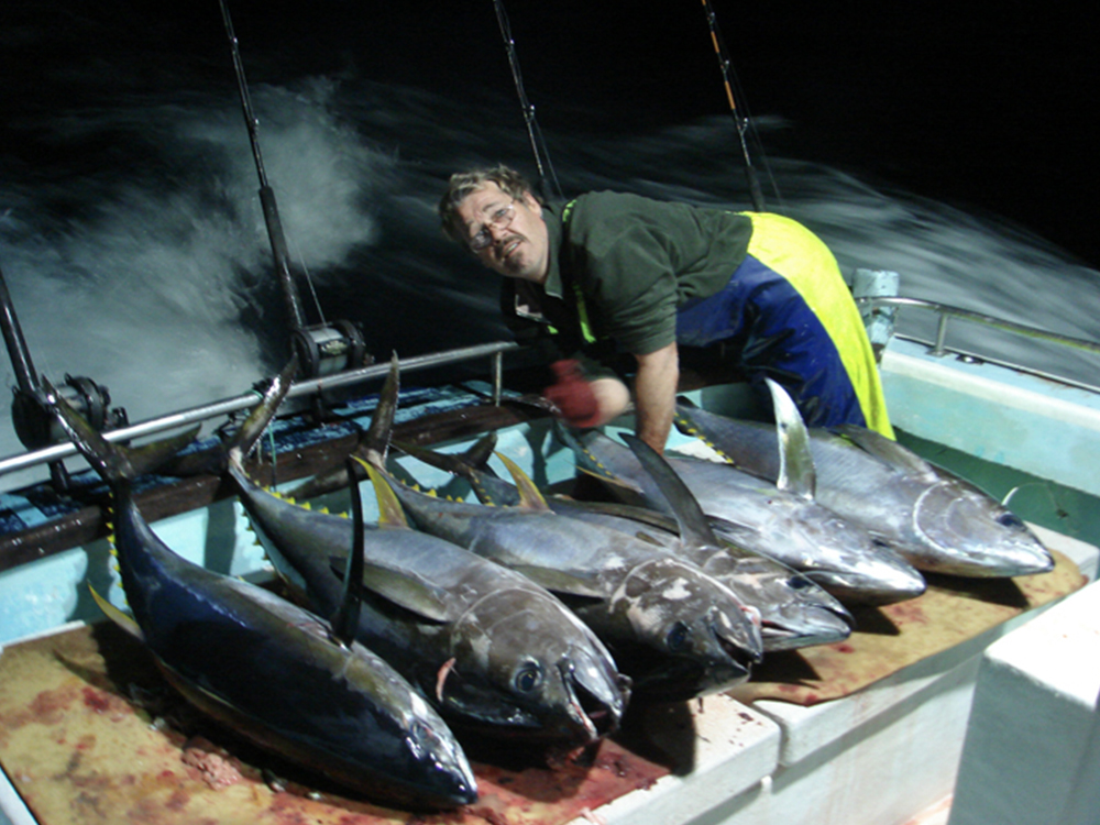 Fishfinder Yellow Fin Tuna