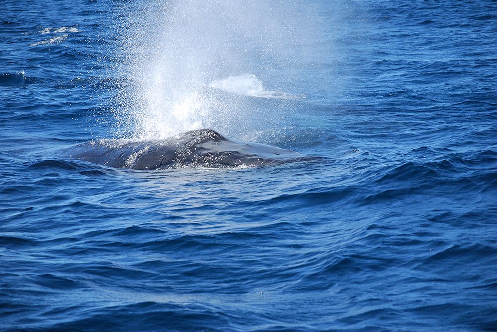 Fishfinder Whale Watching